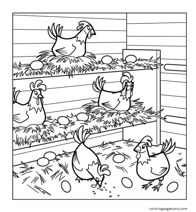 Hen Chicken 1 Coloring Page