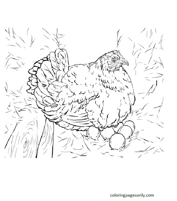 Hen Laying Eggs Coloring Page