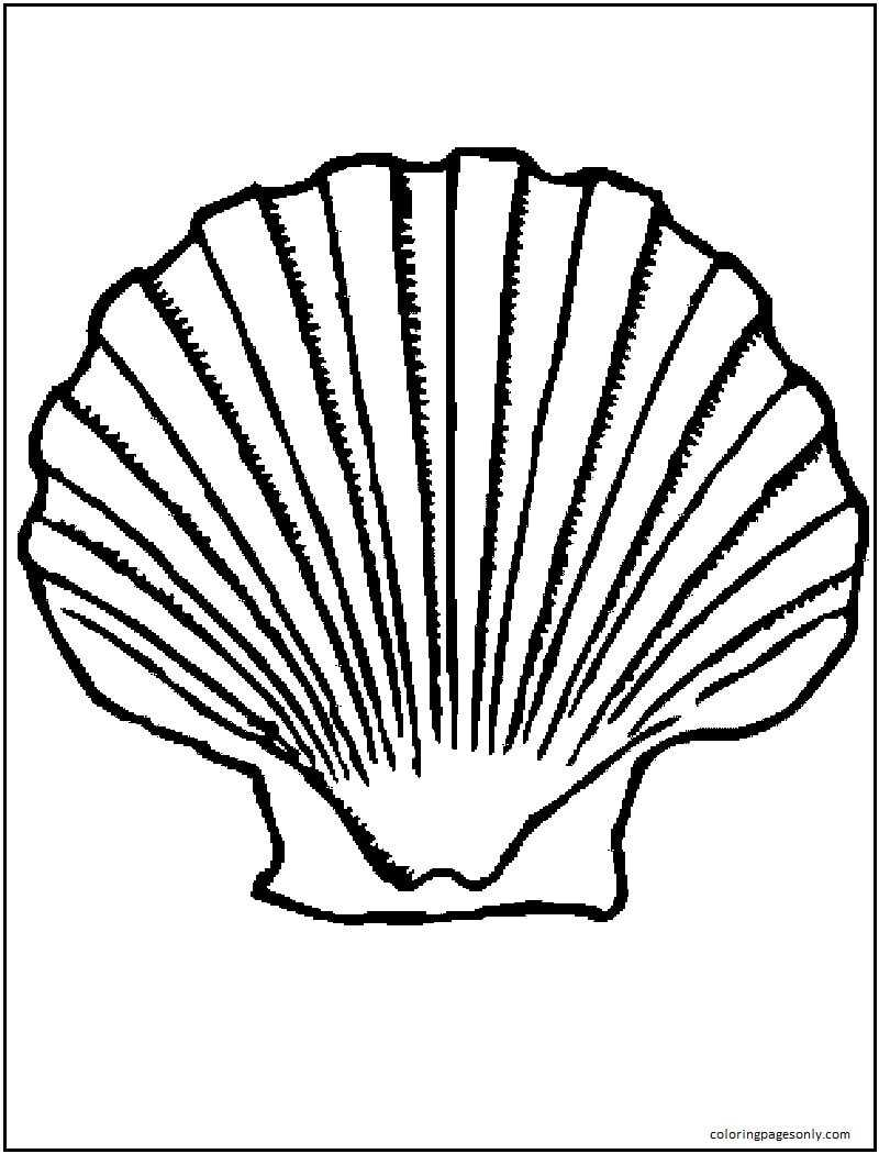 Pictures Clam Coloring Page
