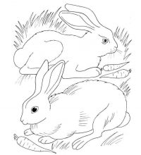 Pair of rabbits eating carrots Coloring Page