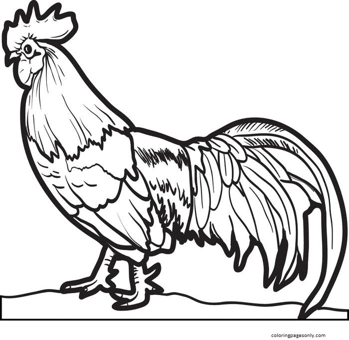 Realistic Chicken Coloring Page