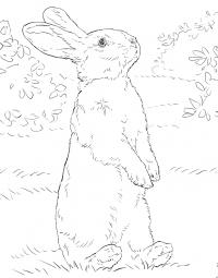 White bunny standing on hind legs Coloring Page