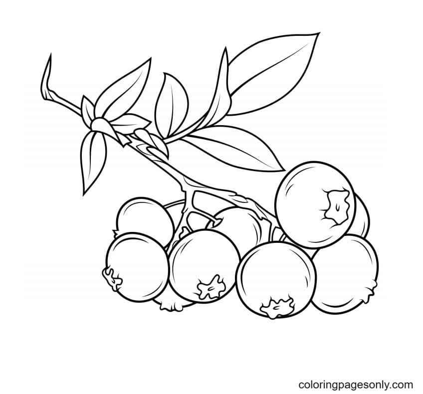 A Blueberry Branch Coloring Page