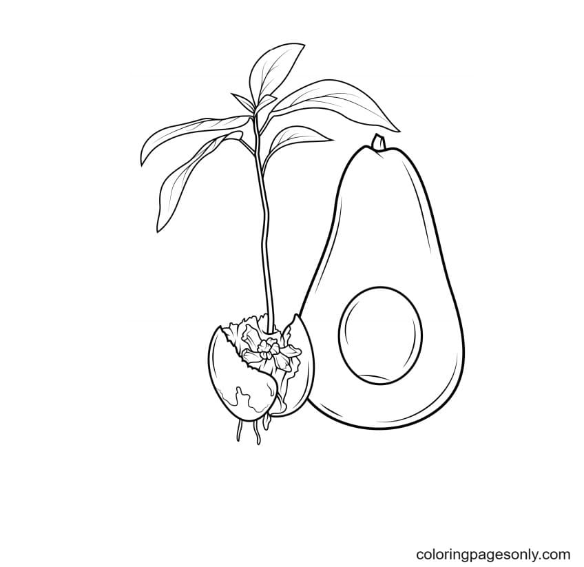 Avocado And Sprout Coloring Page