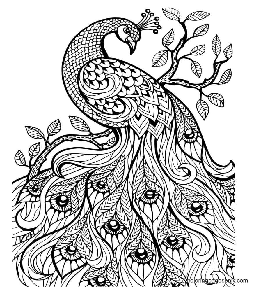 Beautiful Peacock 0 Coloring Page