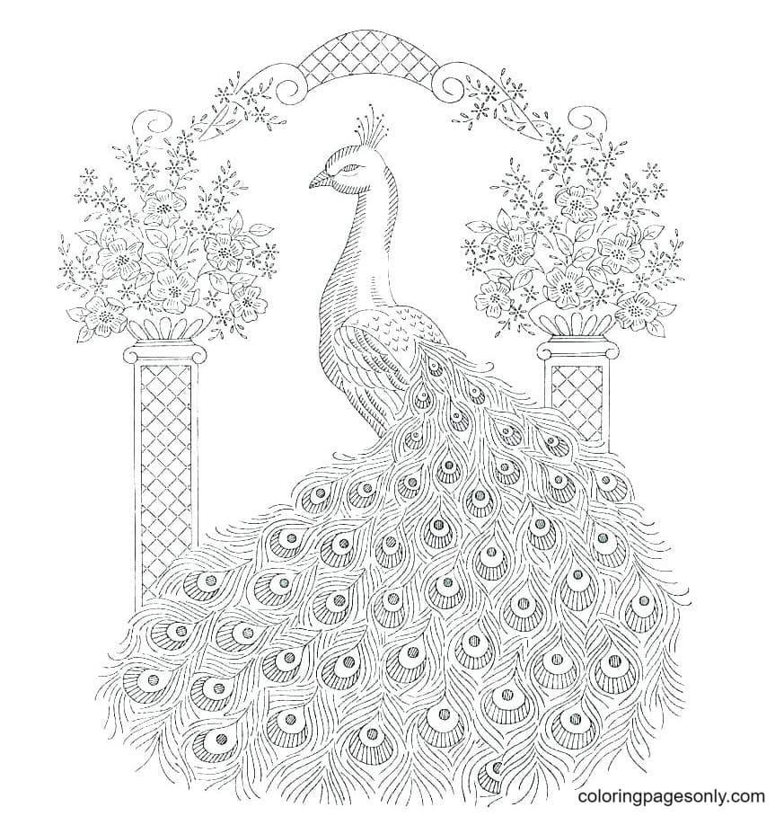 Beautiful Peacock 1 Coloring Page