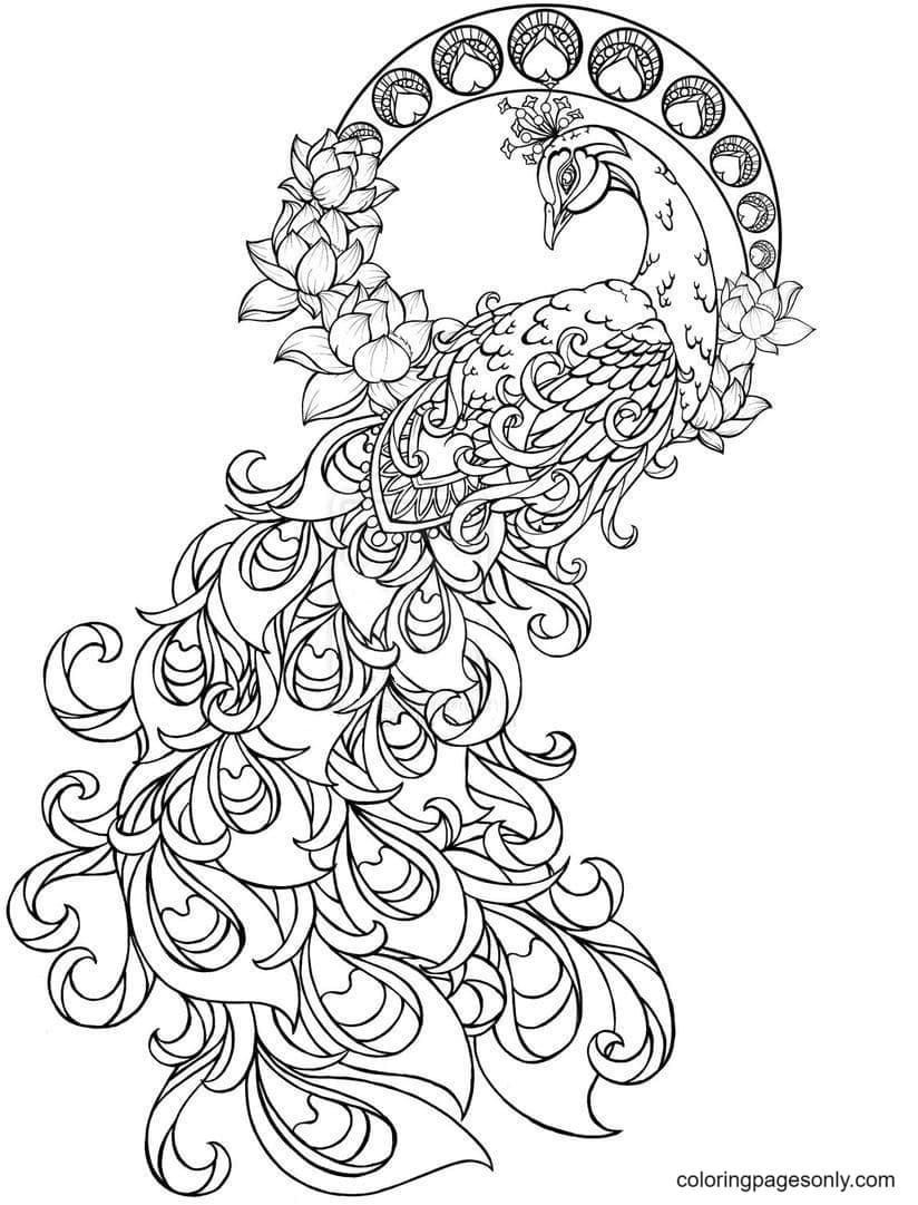 Beautiful Peacock 2 Coloring Page