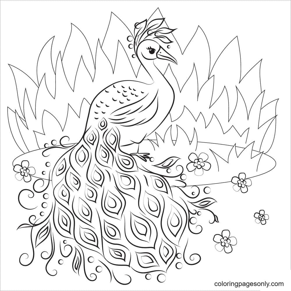 Beautiful Peacock 3 Coloring Page