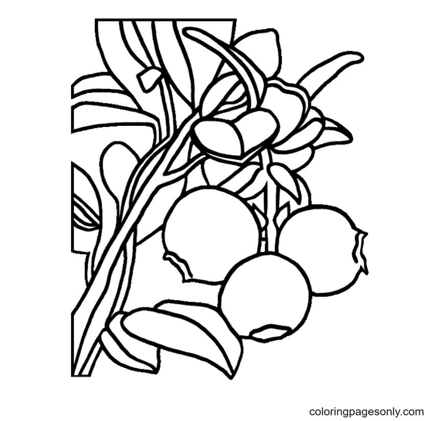 Berries Coloring Page