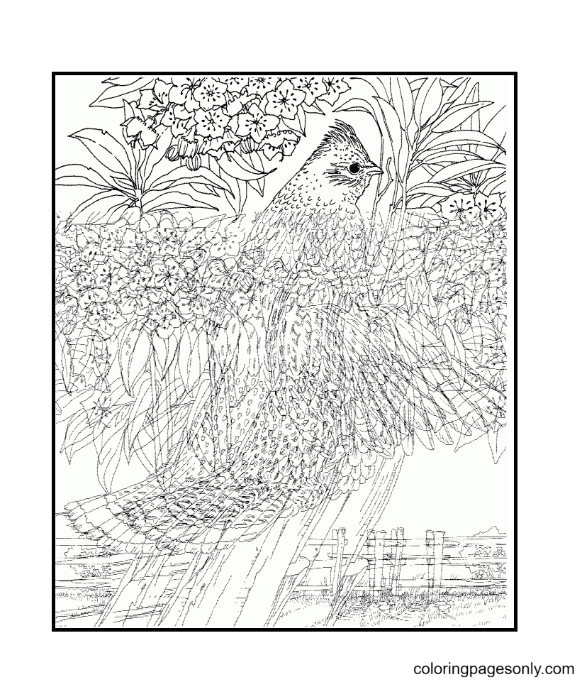 Birds – Super Hard For Adults Coloring Page