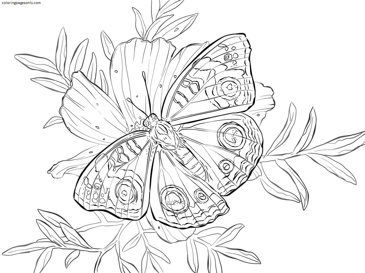 Buckeye Butterfly on a Flower Coloring Page