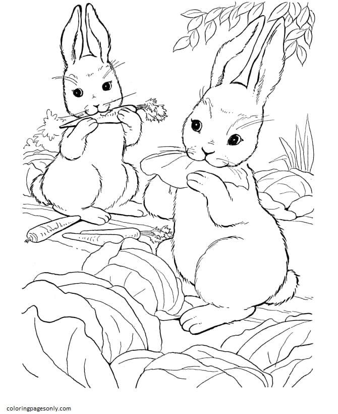Bunny Rabbit Coloring Page