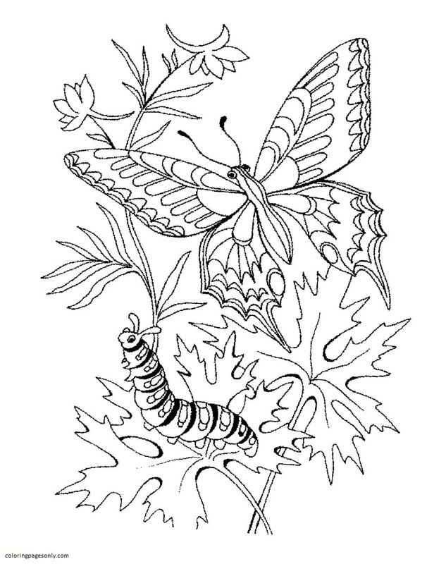 Butterfly 13 Coloring Page