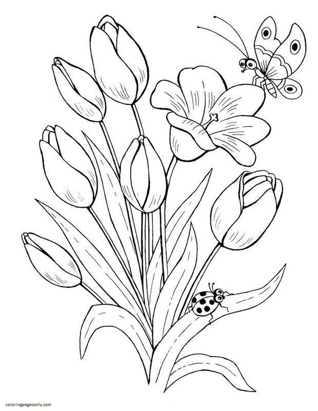 Butterfly 14 Coloring Page