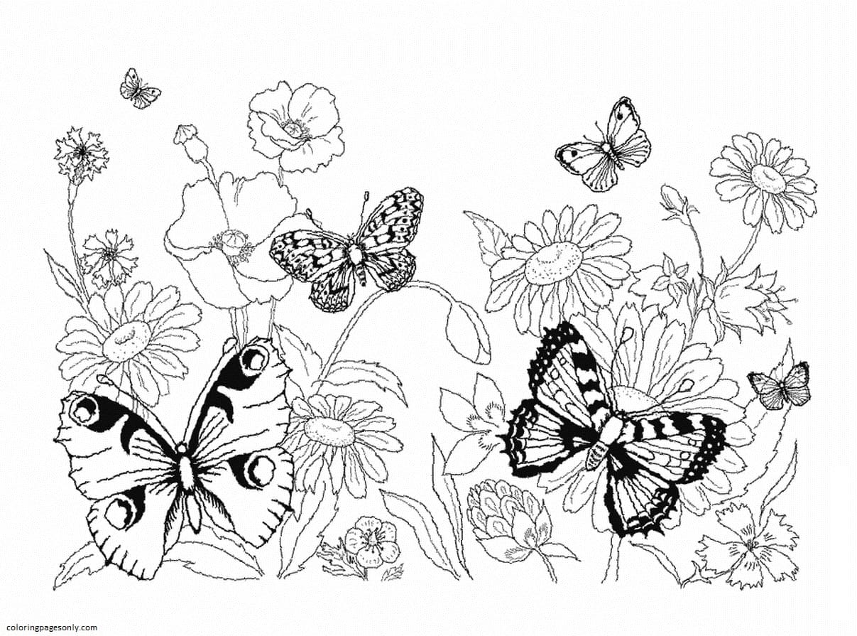 Butterfly 16 Coloring Page
