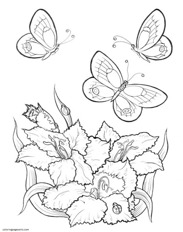 Butterfly 23 Coloring Page