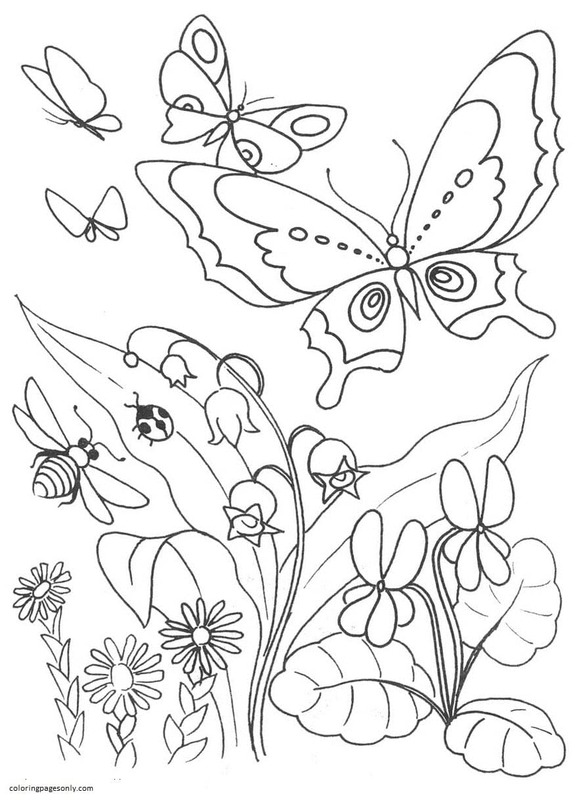 Butterfly 24 Coloring Page