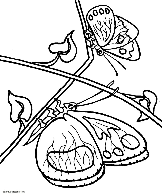 Butterfly 28 Coloring Page
