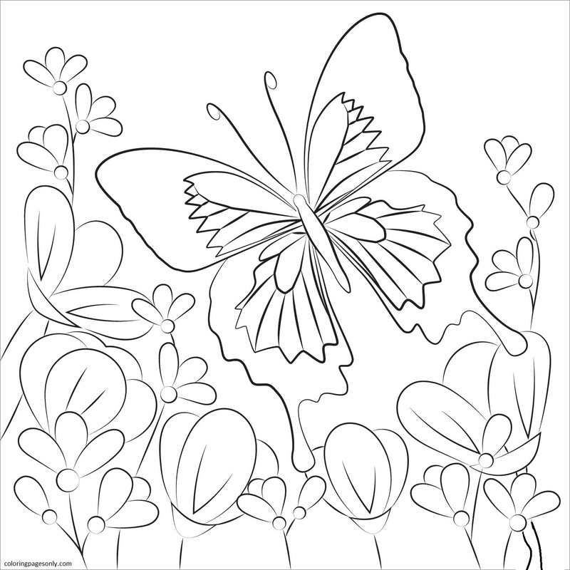 Butterfly 3 Coloring Page