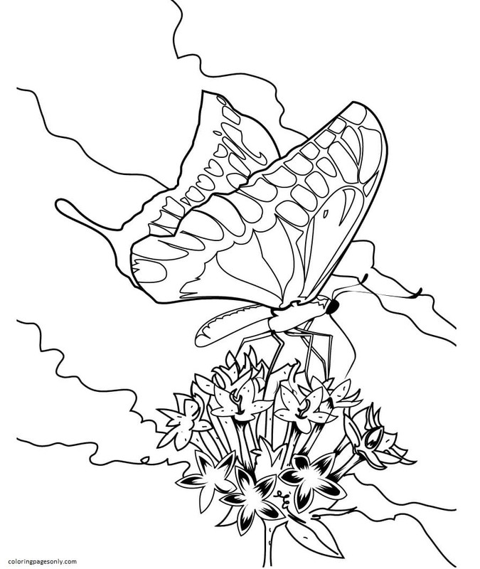 Butterfly 6 Coloring Page