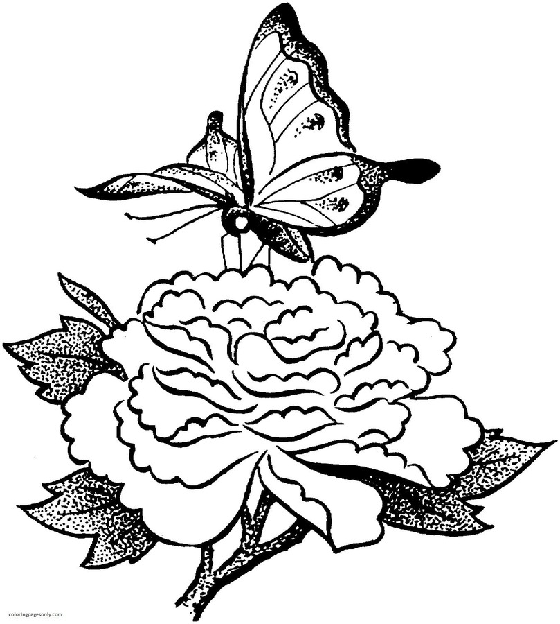 Butterfly On A Flower Coloring Page