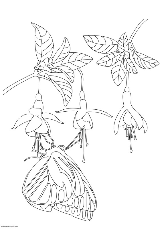 Butterfly and Flowers 1 Coloring Page