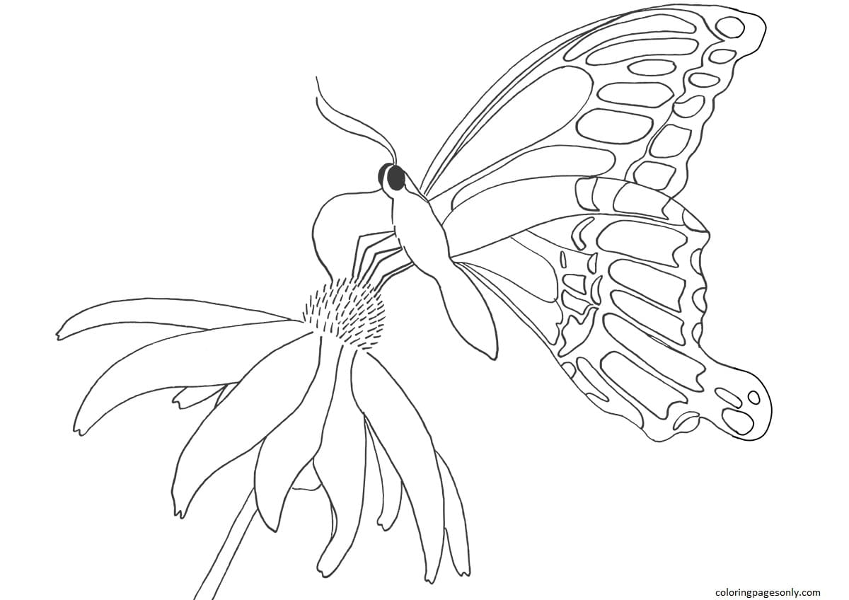 Butterfly on Daisy Coloring Page