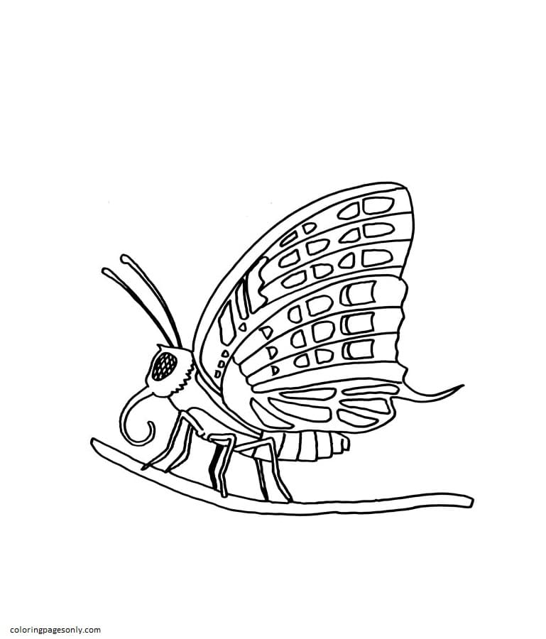 Butterfly on the Tree Coloring Page