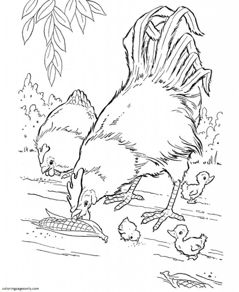 Chickens Farm 1 Coloring Page
