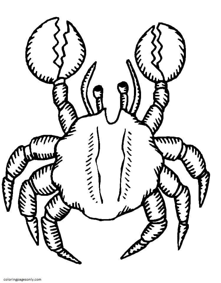 Crab 3 Coloring Page