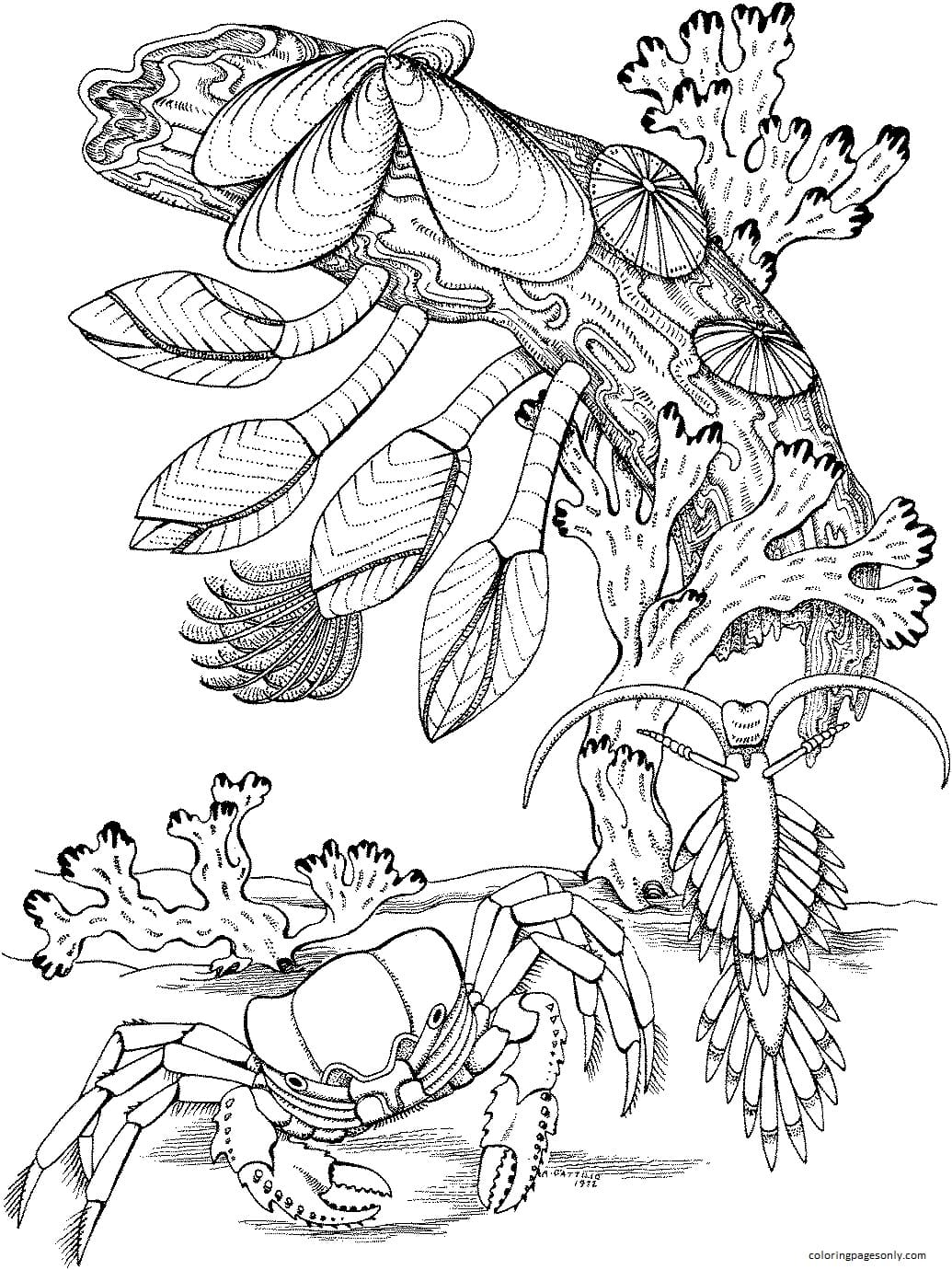 Crab near coral reef Coloring Page