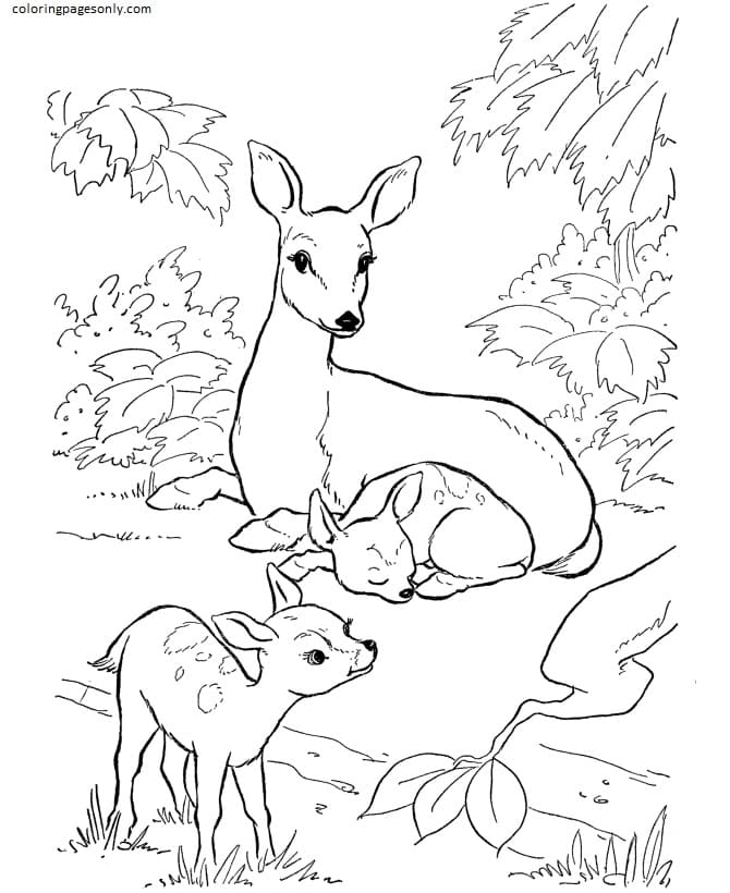 Deer-Farm Animal Coloring Page