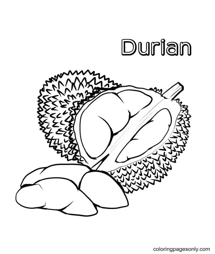 Durian Fruits Coloring Page