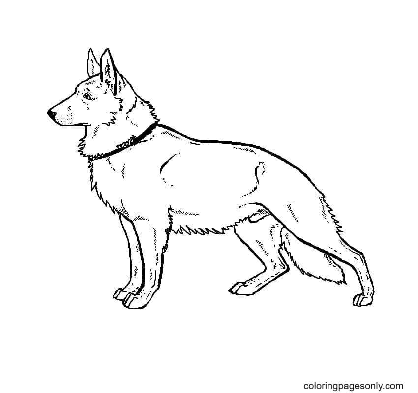 Free German Shepherd Coloring Page