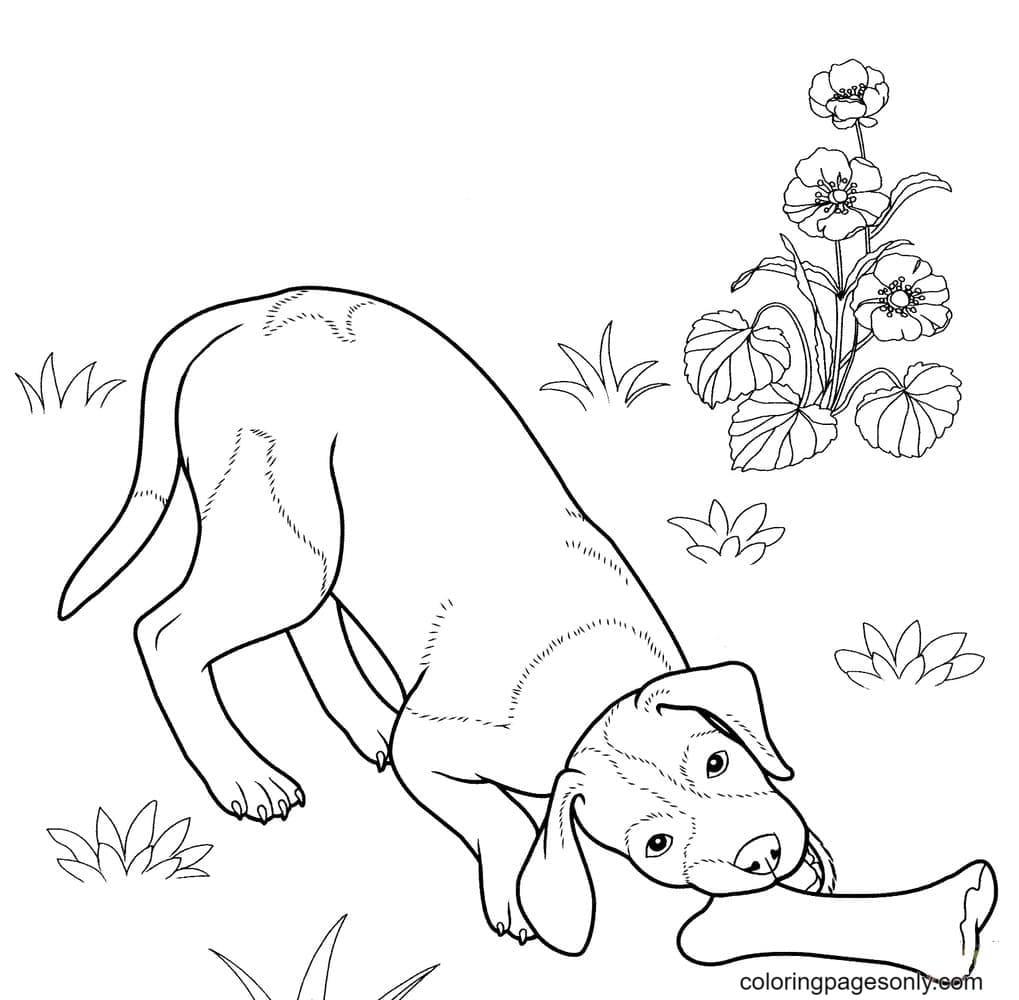 Free Printable German Shepherd for Kids Coloring Page