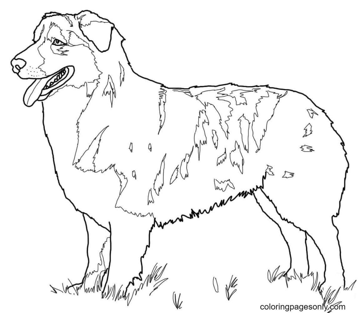 Free Printable German Shepherds Coloring Page