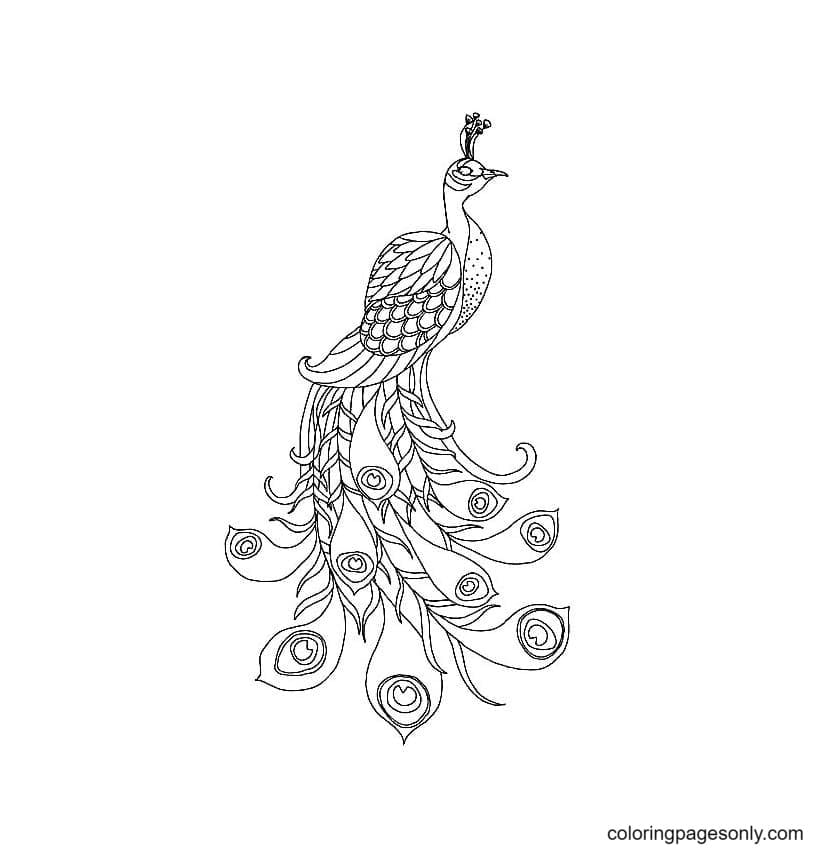 Free Printable Peacock 0 Coloring Page