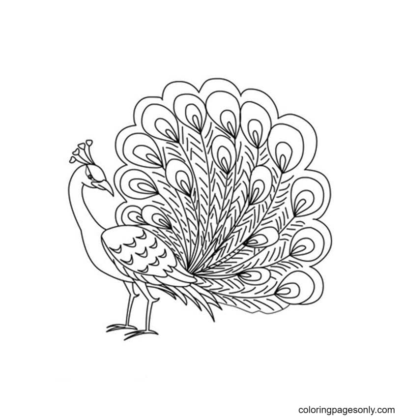 Free Printable Peacock 1 Coloring Page