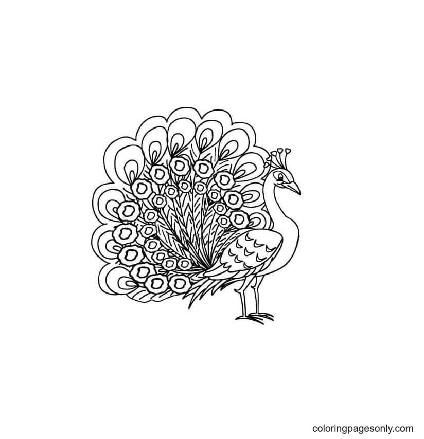 Free Printable Peacock 2 Coloring Page