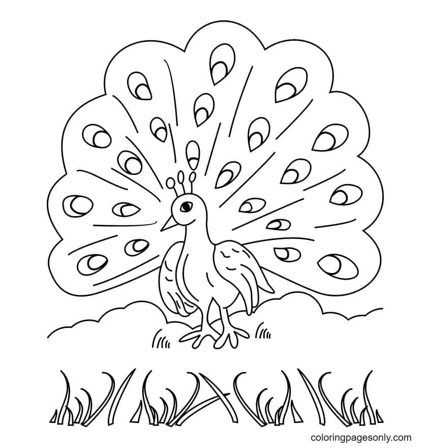 Free Printable Peacock Coloring Page