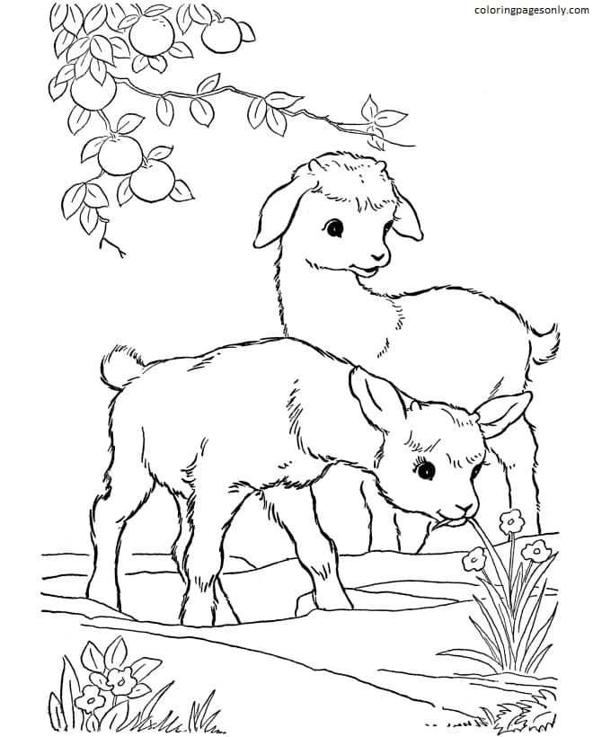Goats-Farm Animal Coloring Page