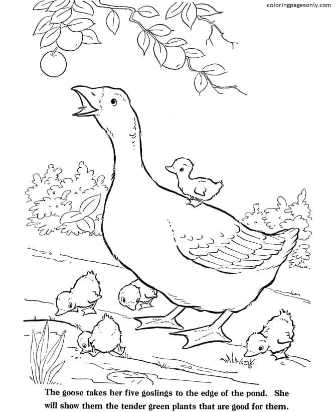 Goose-Farm Animal Coloring Page