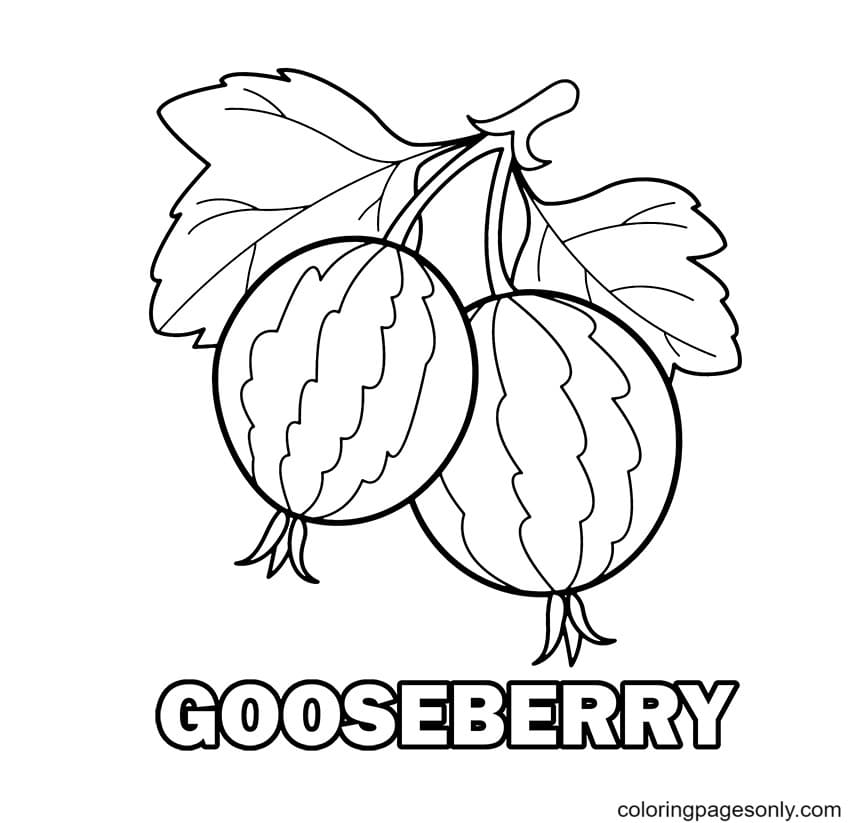 Gooseberry Coloring Page
