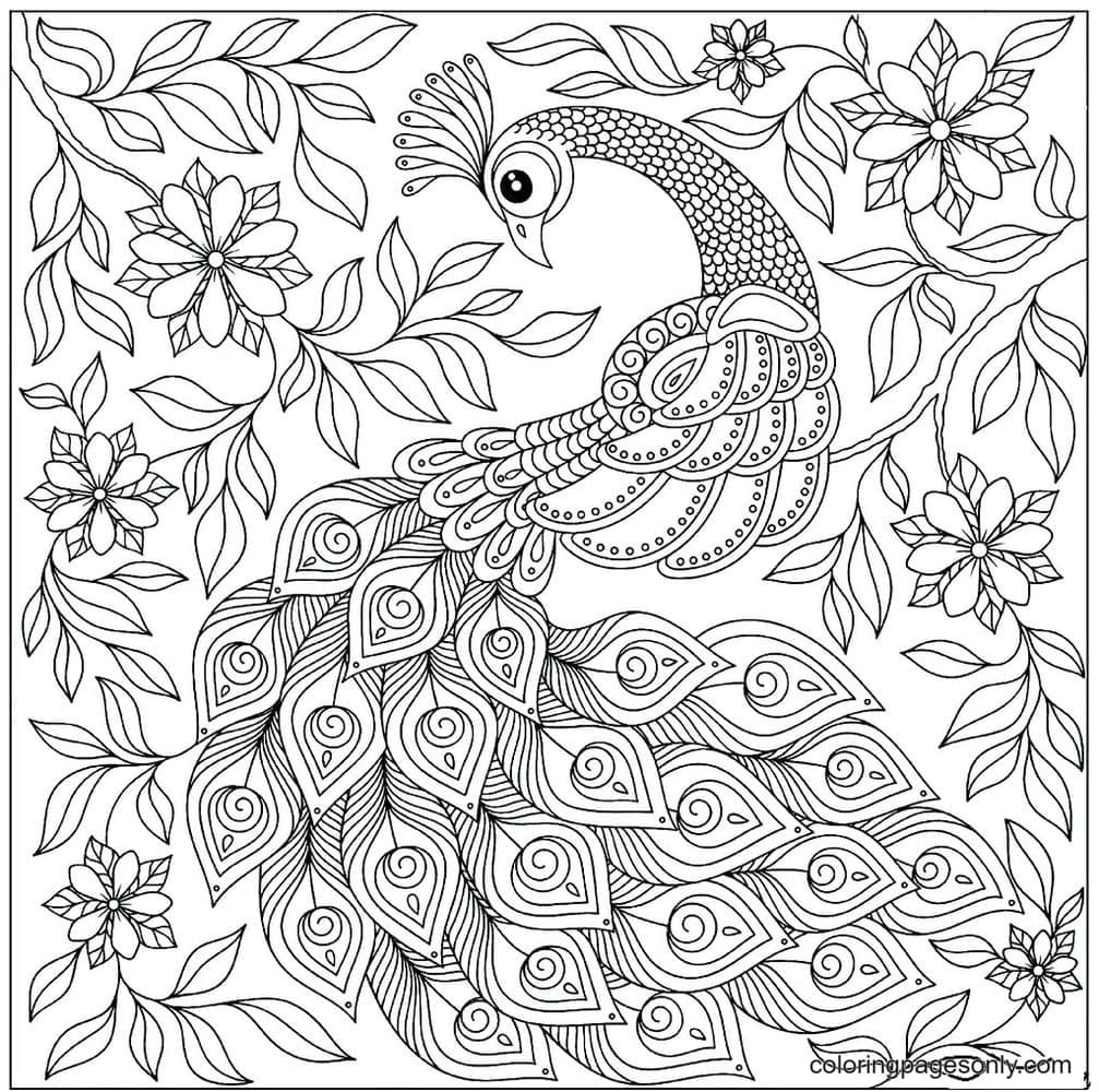Graceful Peacock 1 Coloring Page