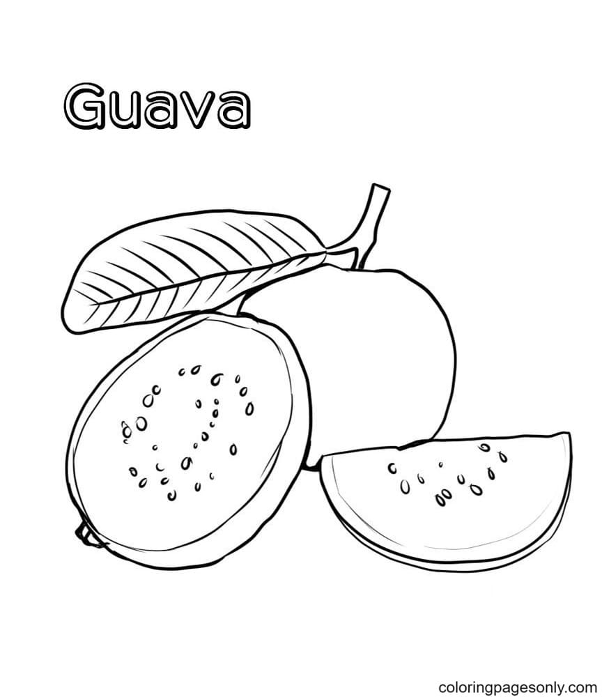 Guava Fruits Coloring Page