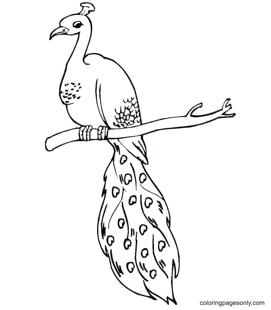 Lineart Peacock Coloring Page