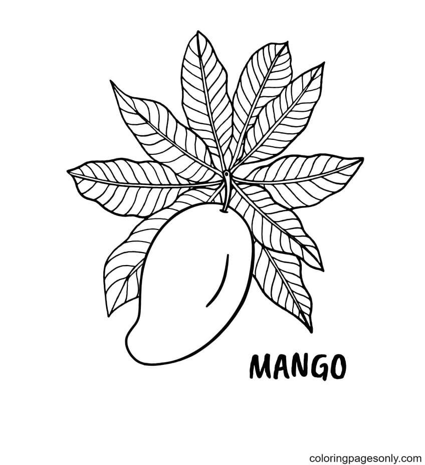 Mango Fruits Coloring Page