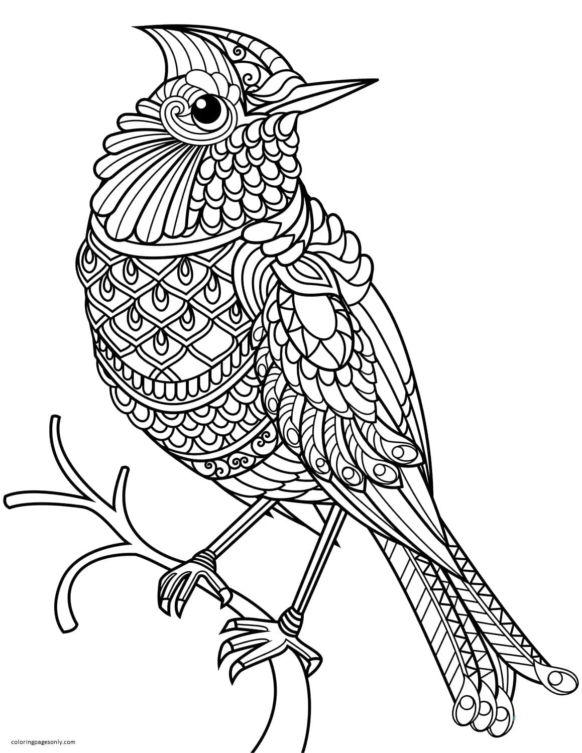 Northern Cardinal Zentangle Coloring Page