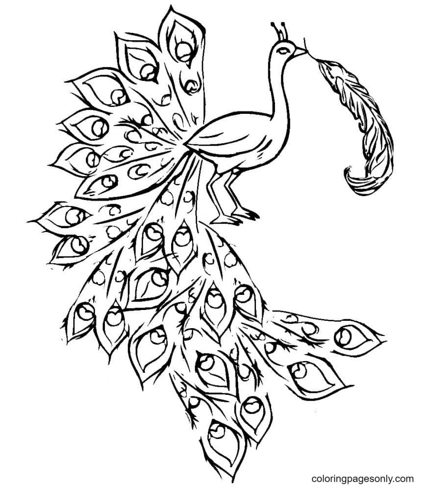 Peacock Beautiful Coloring Page
