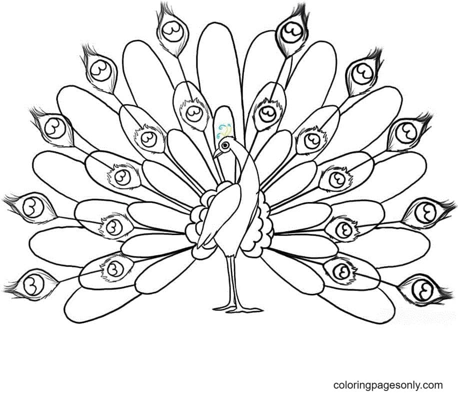 Peacock Drawings Coloring Page